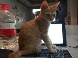 オーナーの猫
